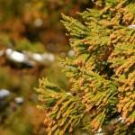 【予言者育成学園攻略】問101.花粉情報で全国11ヶ所のうち花粉が多いに該当する地域数は?【FTA予想】